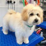 Crawley Dog Groomer