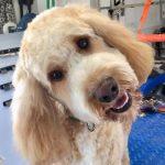 Dog Groomer Crawley