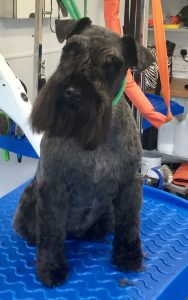 Crawley's compassionate grog groomers