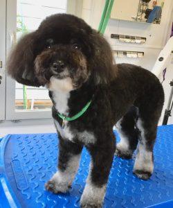 Dog Grooming Crawley